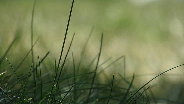 hierba