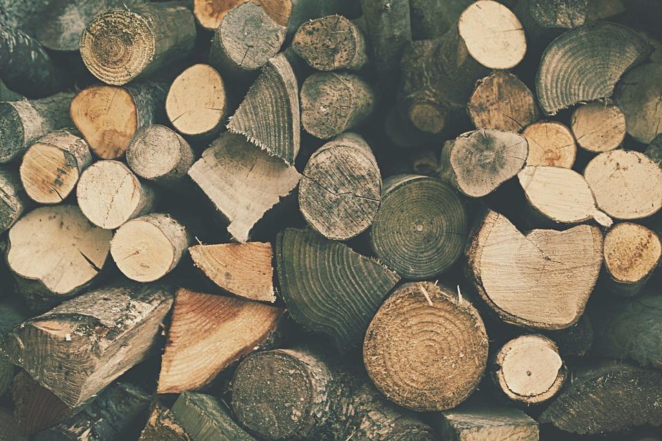 troncos